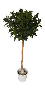 Bay tree wedding aisle liner